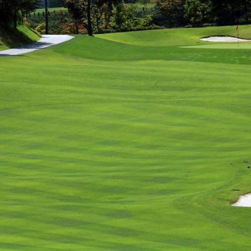Golfer schlägt Ball auf Grün